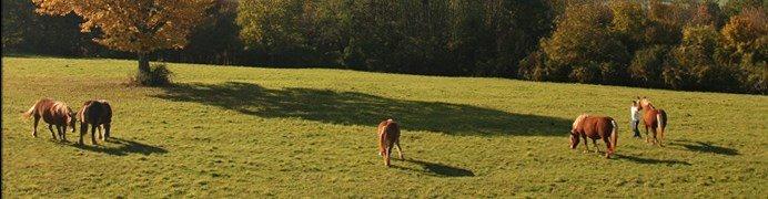 paardrijden frankrijk